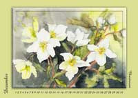 Blumenelfenkalender Aquarell Uschi Liana Krammer